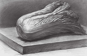 素描大白菜的画法