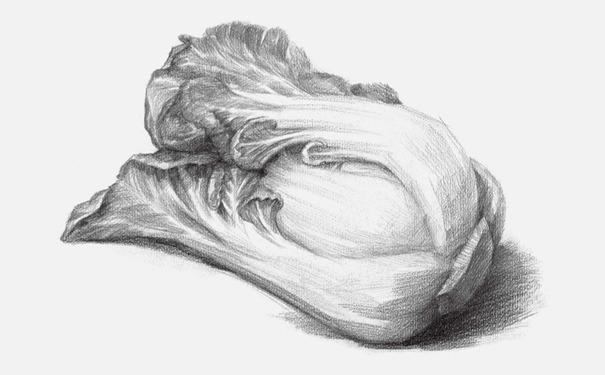 水果素描图片步骤_素描白菜的画法步骤-X美院