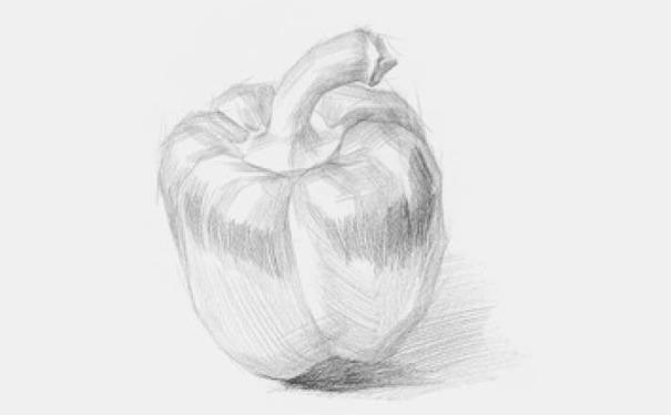 青椒素描图片步骤二