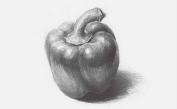 青椒素描图片步骤四