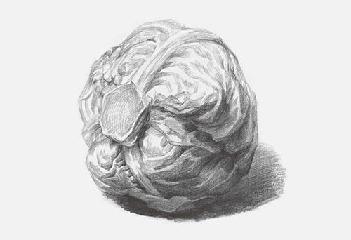 包菜素描怎么画步骤五