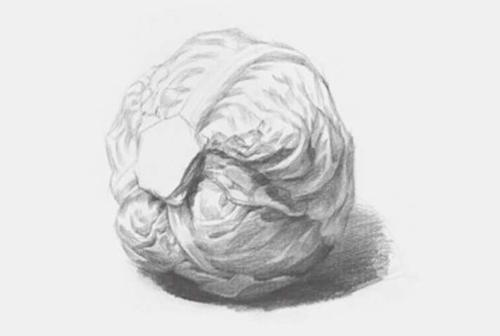 包菜素描怎么画步骤三