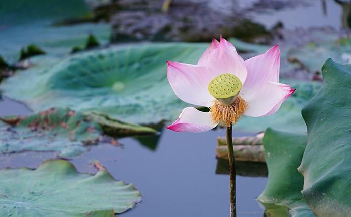 小班美术公开课教案「美丽的花」