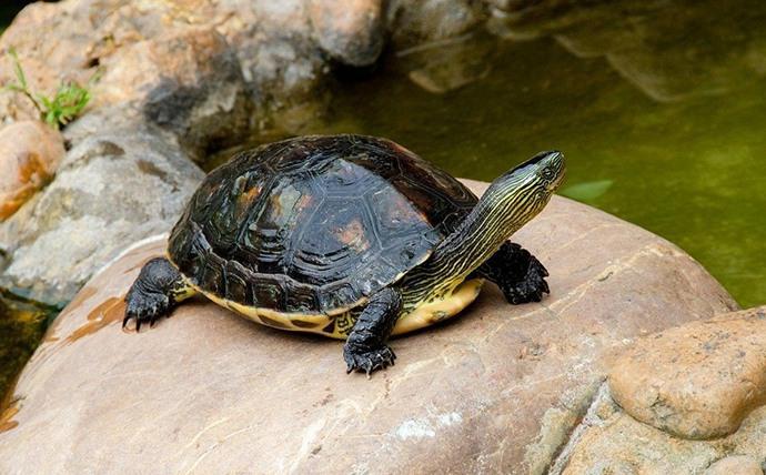 幼儿小班美术教案「爱旅行的小乌龟」