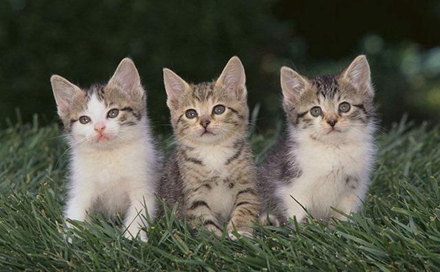 三只小猫图片