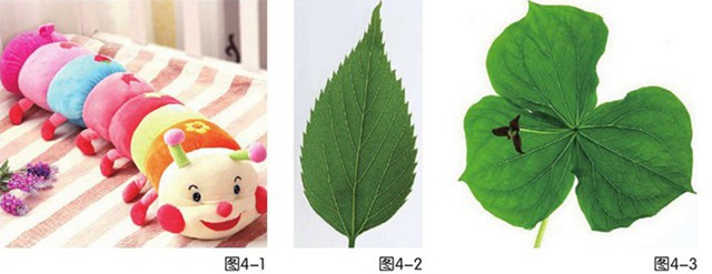 毛毛虫与树叶图4-1、图4-2、图4-3