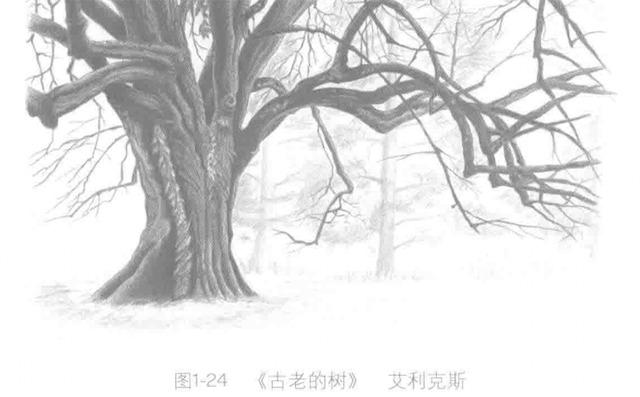 《古老的树》艾利克斯
