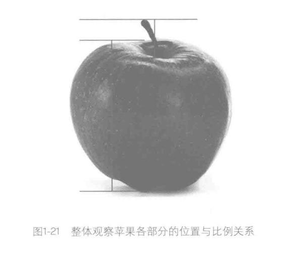 整体观察苹果各部分的位置与比例关系