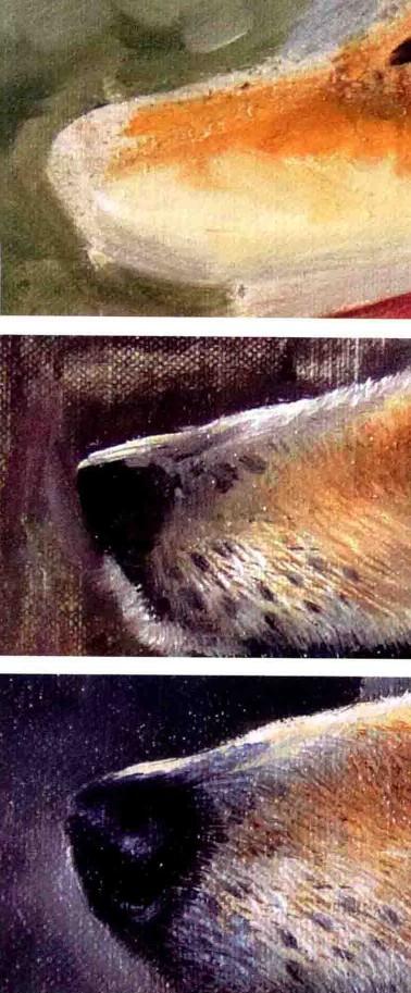 画狗鼻子的步骤