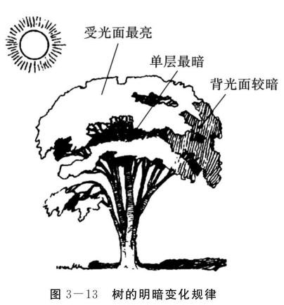 树的明暗变化规律
