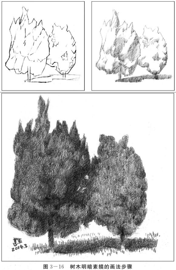 树木明暗素描的画法步骤