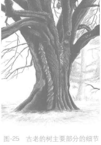 古老的树主要部分的细节
