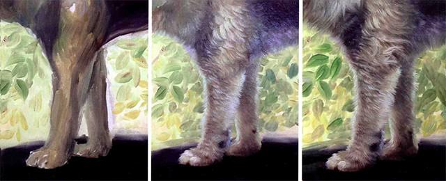 画狗前后肢的步骤