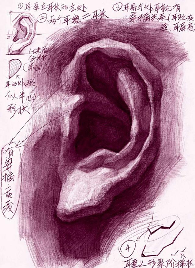 素描耳朵的画法