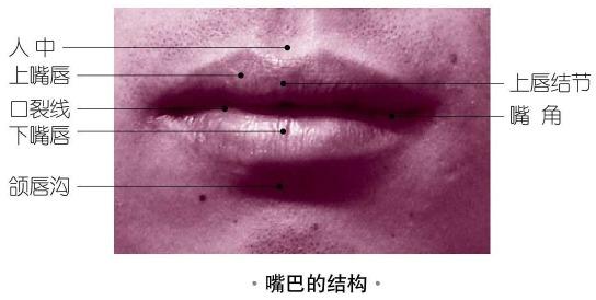 嘴巴的结构