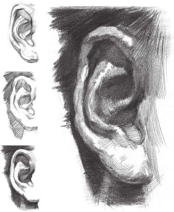 耳朵的画法