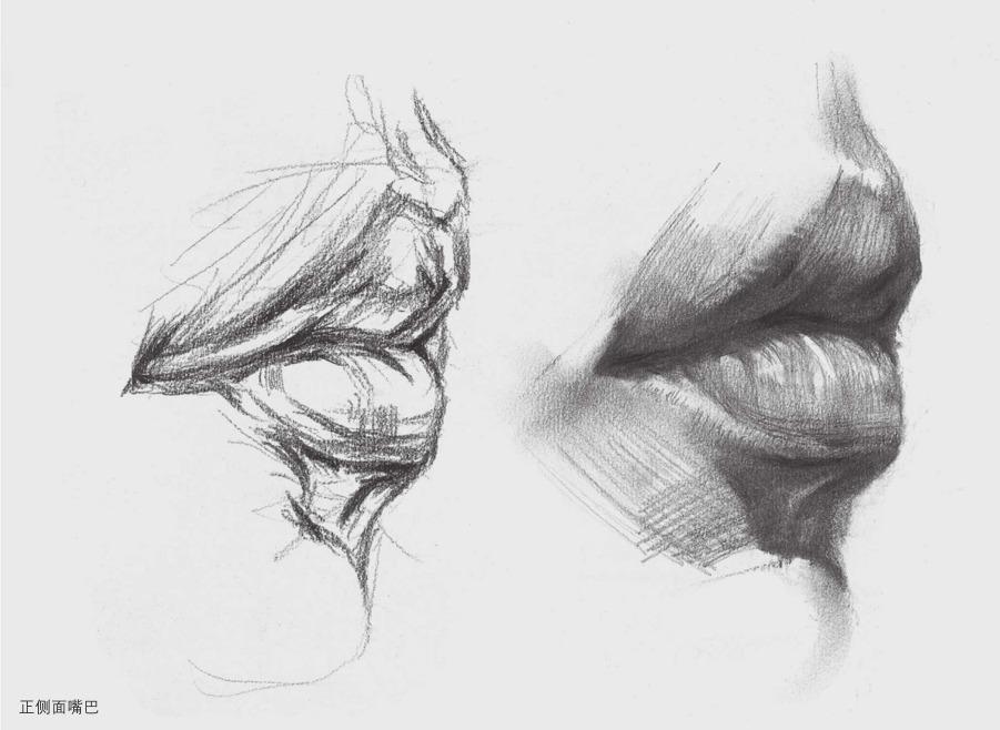 正侧面素描嘴巴的画法