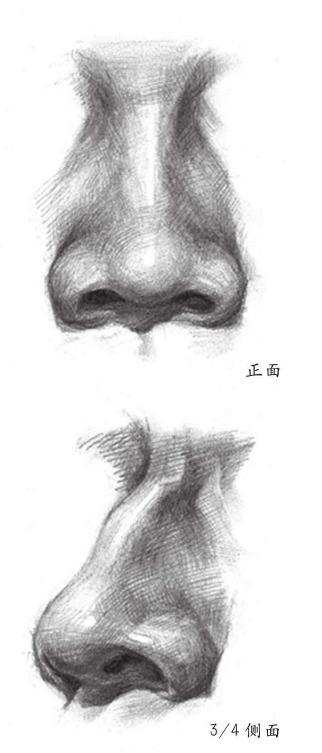 鼻子正面和3/4侧面