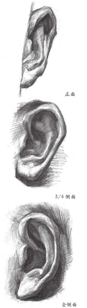 正面侧面耳朵