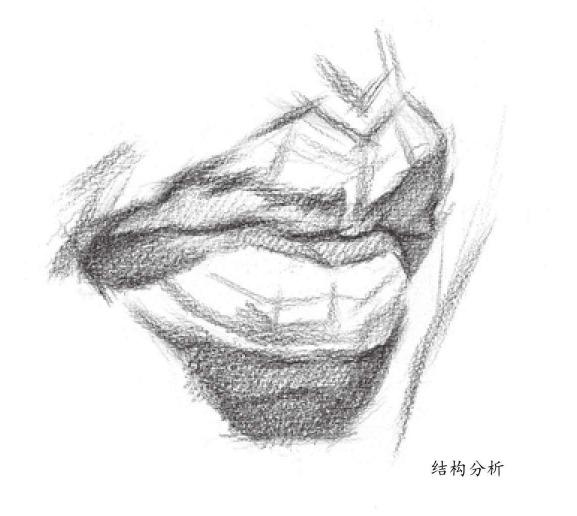 嘴巴结构分析