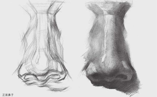 正面素描鼻子的画法图解