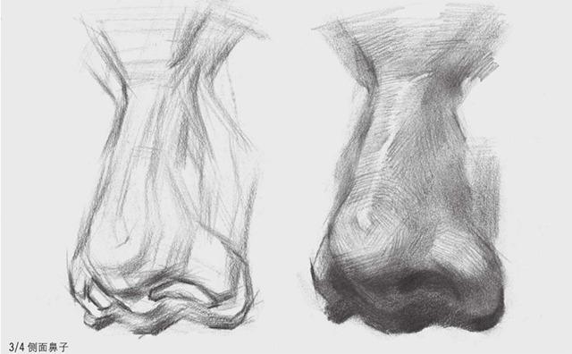3/4侧面素描鼻子的画法图解