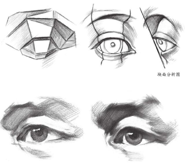 眼睛块面分析图