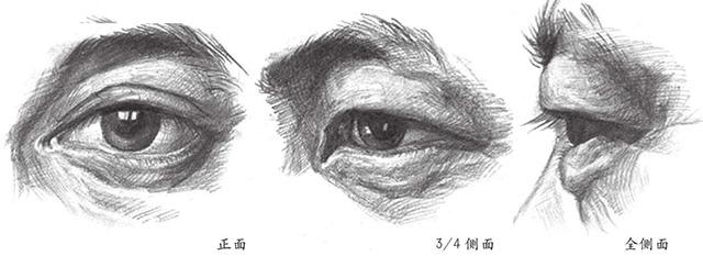 眼睛正面3/4侧面和全侧面