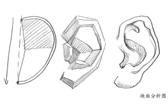 块面耳朵分析图