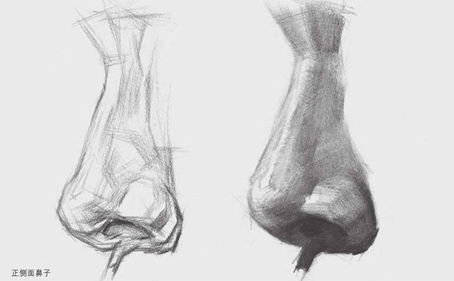 正侧面素描鼻子的画法图解