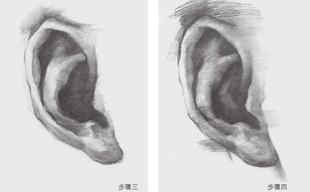 素描耳朵的画法步骤三和四
