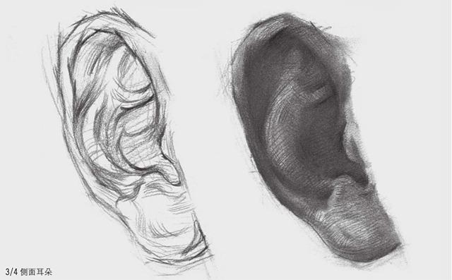 3/4侧面素描耳朵的画法
