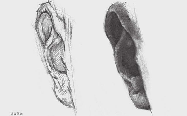 正面素描耳朵的画法