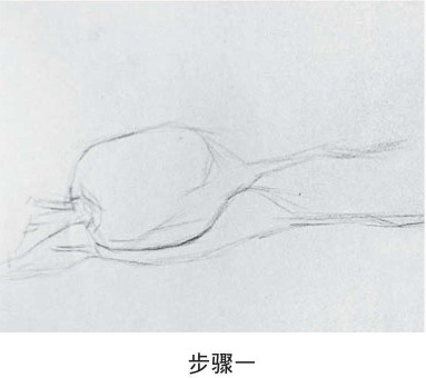 素描萝卜绘画步骤一