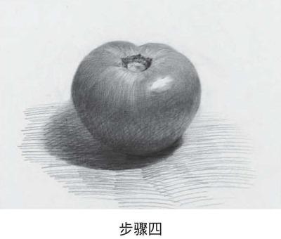 素描西红柿步骤四
