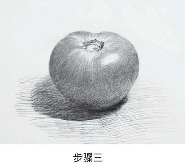 素描西红柿步骤三