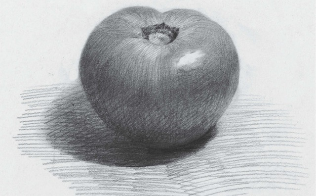 素描西红柿
