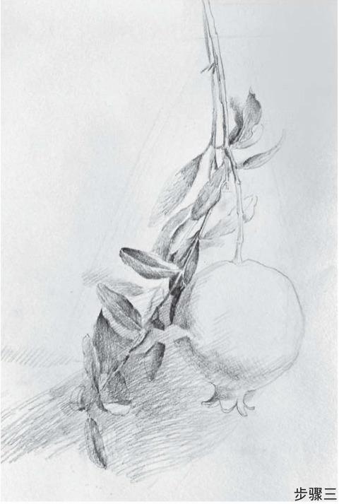石榴绘画步骤三