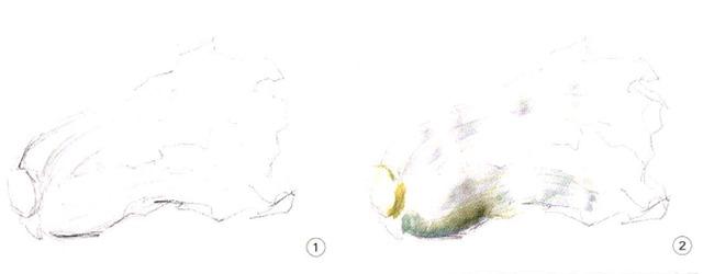 色彩白菜步骤一和二
