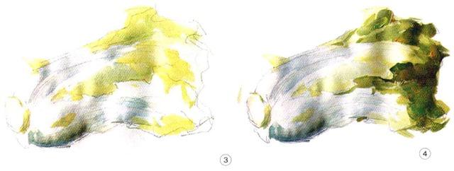 色彩白菜步骤三和四