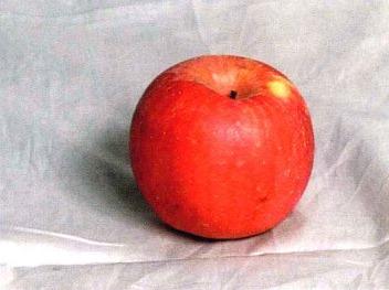 苹果参考图片