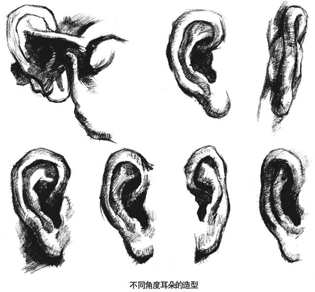 不同角度耳朵的造型