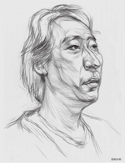 男中年素描头像结构分析