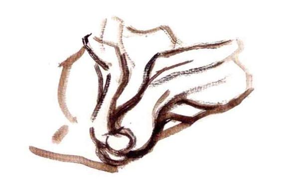 单体静物油菜水粉作画步骤(1)