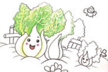 白菜家族绘画步骤(3)