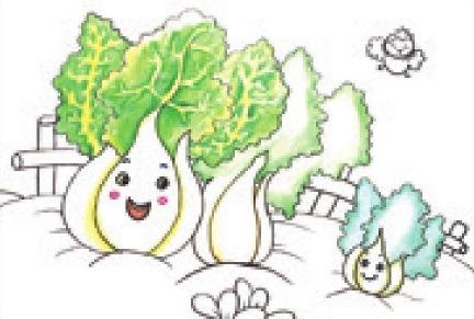 白菜家族绘画步骤(4)