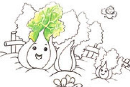 白菜家族绘画步骤(2)