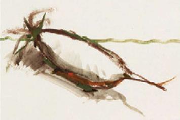 色彩白萝卜的画法(1)