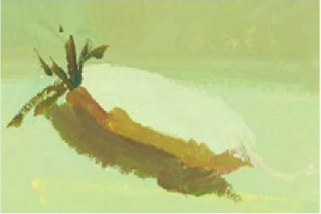 色彩白萝卜的画法(2)