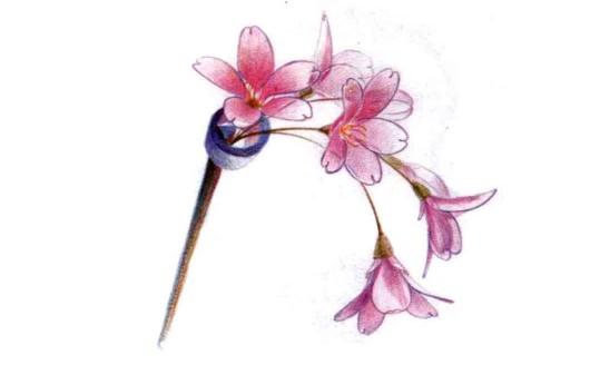 儿童花朵发簪怎么画(3)